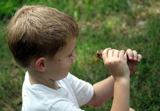 Face To Face. A little boy looking at a toads he's caught Royalty Free Stock Image