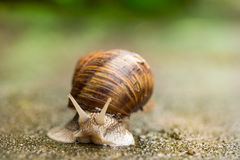 Face to face with snail Royalty Free Stock Images