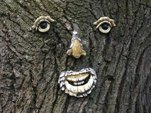 Face in a tree. Face in the bark of a tree Royalty Free Stock Photography
