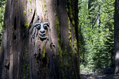 The face in the tree Stock Images