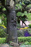 A face on a tree Stock Photos