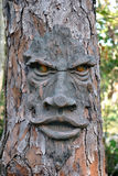 Face on a tree Royalty Free Stock Photos