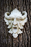 Face on a tree Royalty Free Stock Image