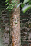 Face on a tree. Eyes, nose, mouth, on a tree trunk Stock Photography