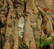Face in tree. At wat mahataht Stock Photos