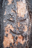 Face in a tree Stock Photography