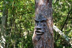 Face On Tree. It is surprising to come upon this tree in a tropical forest in Florida.  Fortunately he did not mind posing for the picture Royalty Free Stock Image
