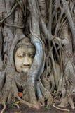 Face in tree. At wat mahathat Royalty Free Stock Photos