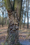 Face in tree Royalty Free Stock Photography