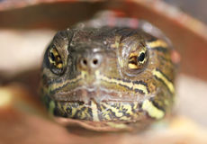 Face of turtle Stock Image