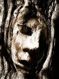 Face in wood. Bark Royalty Free Stock Photos