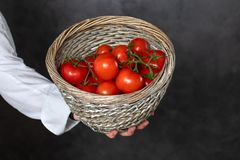 Faceless chef holding basket with ripe tomatoes. Crop cook in uniform holding basket with fresh ripe tomatoes on black background stock photos