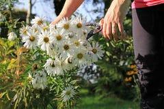 Facendo il giardinaggio in autunno Immagini Stock