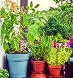 Facendo il giardinaggio a casa sul balcone, sui vasi con le erbe e sulle glicine fotografia stock libera da diritti