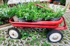 Facendo il giardinaggio con la carriola rossa immagine stock libera da diritti