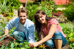 Facendo il giardinaggio in estate - raccolta delle coppie Immagini Stock