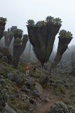 Facendo un'escursione in Africa Fotografia Stock