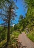 Facendo un'escursione al Cervino, cima delle alpi svizzere Fotografia Stock