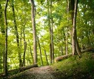 Facendo un'escursione attraverso la foresta spessa Immagine Stock