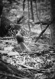 Facendo un'escursione attraverso la foresta spessa Fotografie Stock Libere da Diritti