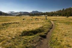 Facendo un'escursione attraverso la sosta nazionale del Yosemite Fotografie Stock