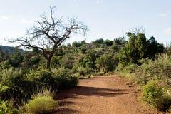 Facendo un'escursione fra le colline dell'argilla Fotografie Stock