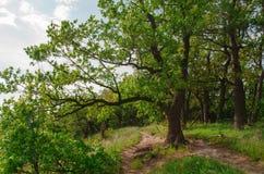 Facendo un'escursione in natura per vedere il mondo fotografie stock libere da diritti