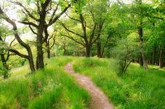 Facendo un'escursione in natura per vedere il mondo immagine stock