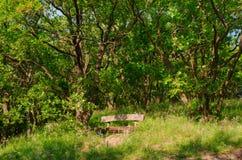 Facendo un'escursione in natura per vedere il mondo immagini stock libere da diritti