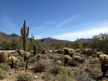 Facendo un'escursione nel deserto Fotografie Stock Libere da Diritti