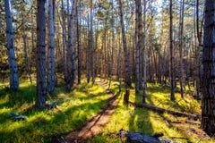 Facendo un'escursione nel legno Fotografie Stock