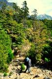 Facendo un'escursione nel legno Immagini Stock Libere da Diritti
