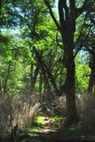 Facendo un'escursione nel legno Immagine Stock Libera da Diritti