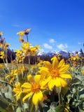 Facendo un'escursione nel Tetons Fotografia Stock Libera da Diritti