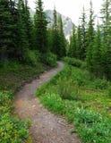 Facendo un'escursione nella foresta Fotografie Stock Libere da Diritti