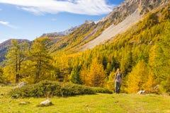 Facendo un'escursione nelle alpi, stagione variopinta di autunno Immagine Stock