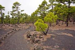 Facendo un'escursione percorso, itinerario dei vulcani nell'isola di Palma della La, Immagine Stock