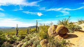 Facendo un'escursione sulla traccia della caverna del vento della montagna di Usery circondata dai grandi massi, dal saguaro e da fotografia stock libera da diritti
