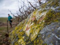 Facendo un'escursione sulla traccia di Lahnwanderweg vicino a Runkel, Assia, Germania Fotografia Stock Libera da Diritti