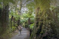 Facendo un'escursione viaggio a ruggire Billy Falls fra gli alberi della felce e della foresta pluviale, la Nuova Zelanda immagine stock