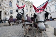 Facendo un giro turistico a Vienna Immagini Stock