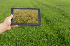 Facendo uso della compressa sul giacimento di grano Agricoltura moderna Futures c del grano Immagini Stock Libere da Diritti