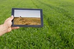 Facendo uso della compressa sul giacimento di grano Agricoltura moderna Futures c del grano Fotografia Stock Libera da Diritti