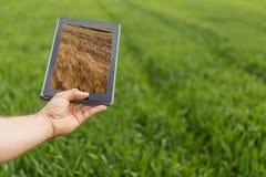 Facendo uso della compressa sul giacimento di grano Agricoltura moderna Futures c del grano Immagine Stock
