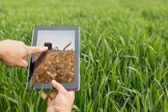 Facendo uso della compressa sul giacimento di grano Agricoltura moderna Futures c del grano Immagine Stock Libera da Diritti