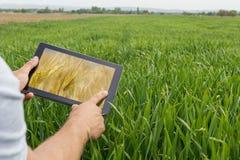 Facendo uso della compressa sul giacimento di grano Agricoltura moderna Futures c del grano Immagini Stock