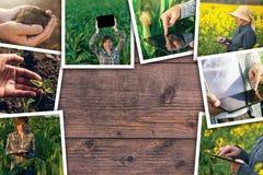 Facendo uso di tecnologia moderna nell'agricoltura, collage della foto Immagini Stock Libere da Diritti