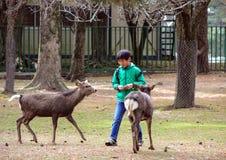 Facet karmi rogacza w parku Fotografia Royalty Free