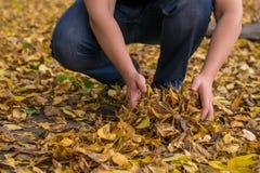 Facet zbiera ręki spadać liście na ulicie outdoors fotografia royalty free