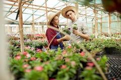 Faceta i dziewczyny ogrodniczki w słomiani kapelusze wybierają garnki z kwiat rozsadami w szklarni na słonecznym dniu fotografia stock